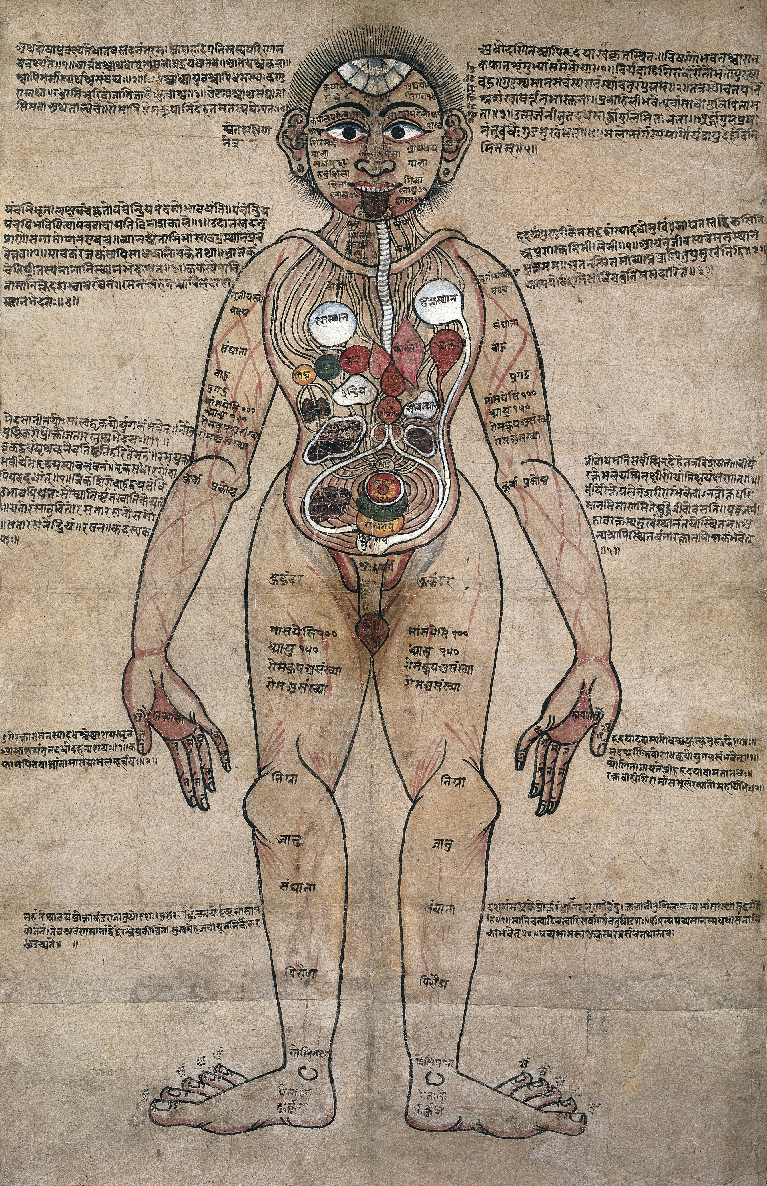 L0017592 The Ayurvedic Man., c.18th century Credit: Wellcome Library, London. Wellcome Images images@wellcome.ac.uk http://wellcomeimages.org Anatomical study of a man standing with Nepalese and Sanskrit texts showing the Ayurvedic understanding of the human anatomy. Pen and watercolour c. 18th Century Published: - Copyrighted work available under Creative Commons Attribution only licence CC BY 4.0 http://creativecommons.org/licenses/by/4.0/